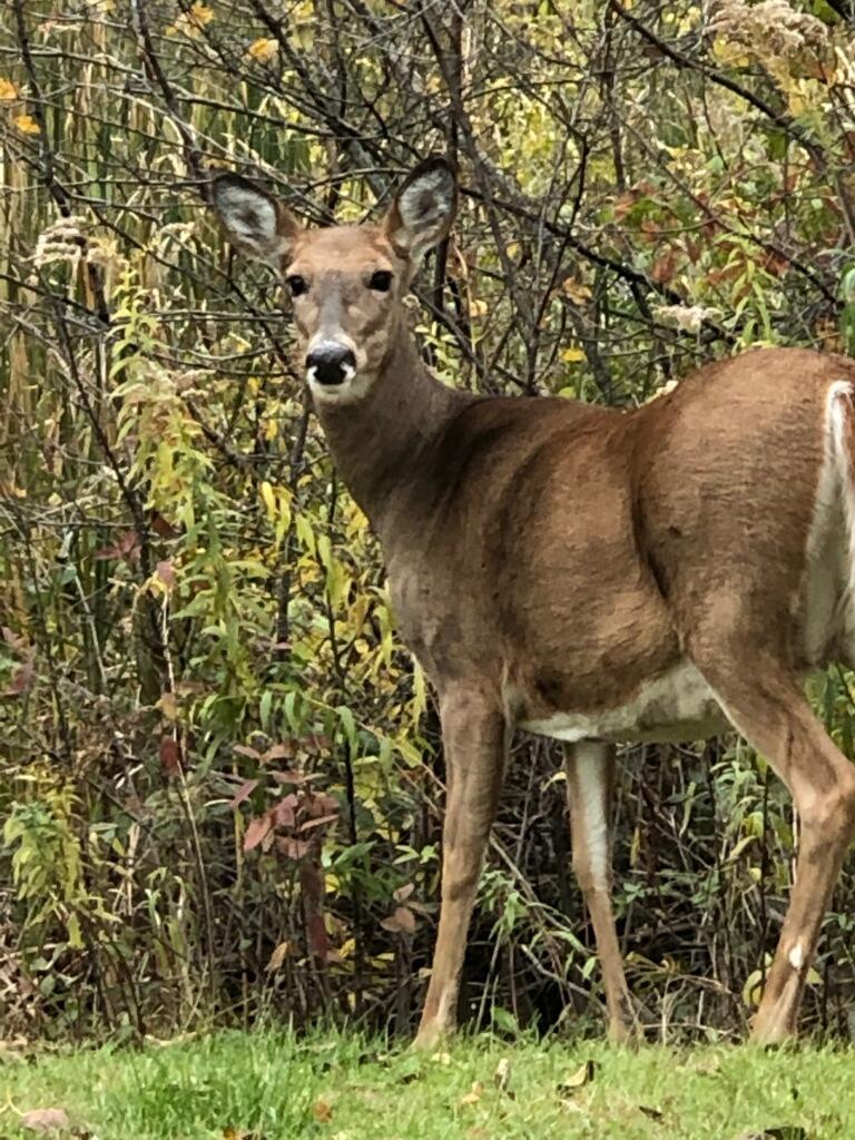 Deer Lisa's husband